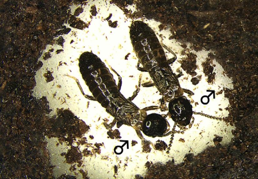 termites_MM