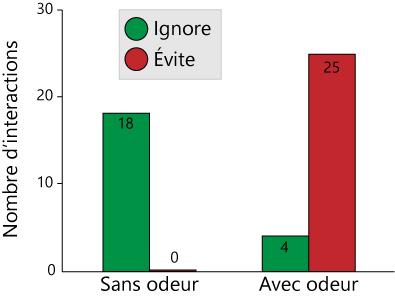 graph odeur