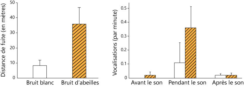 graphs son