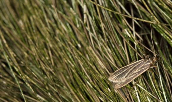 sloth_moth