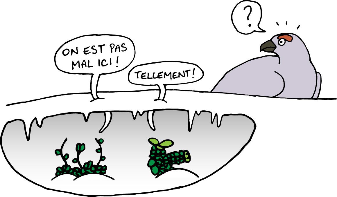 dessin_article_sans_fleurs