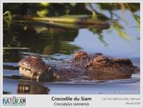 Le crocodile du Siam est en danger critique d'extinction, c'est pourquoi des missions de réintroduction ont été menées dans les années 2000 au Vietnam. Soixante adultes venus de fermes illégales, les vendant pour leur viande et leur peau, et de zoos ont ainsi été testés génétiquement pour limiter la consanguinité et l'hybridation avec d'autres espèces de crocodiles avant d'être relâchés. Aujourd'hui, la population se porte bien et des missions de suivi et de comptage sont prévues.