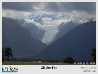 Les quatre glaciers alpins qui alimentent le glacier Fox reçoivent environ 3 mètres de neige par an. Elle se densifie en hauteur jusqu'à former une magnifique glace bleue sur des centaines de mètres de profondeur. Bien que la chute de neige reste abondante au cours du temps, ce glacier n'est pas épargné par le réchauffement climatique et le recul des glaces depuis 1890. Il s'étend cependant sur 13 km et descend environ jusqu'au niveau de la mer.